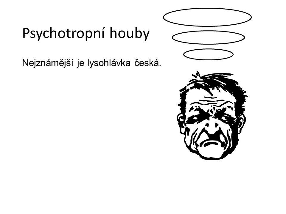 Psychotropní houby Nejznámější je lysohlávka česká.