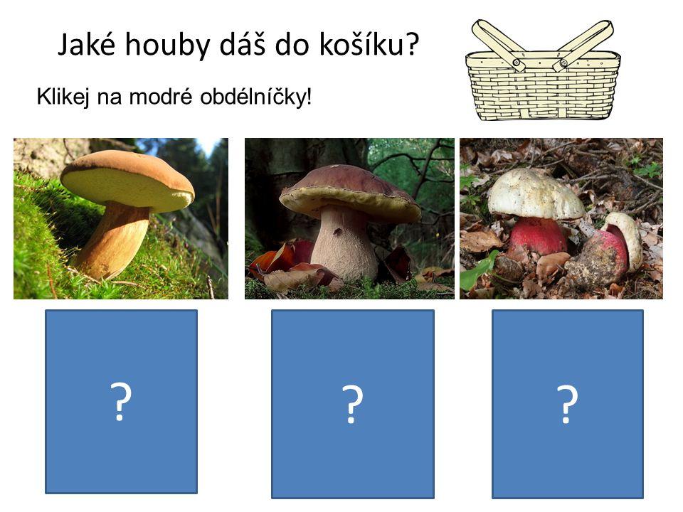 Jaké houby dáš do košíku. Klikej na modré obdélníčky.