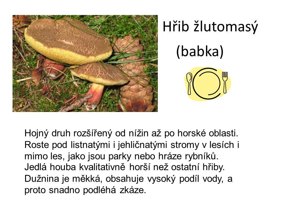 Hřib žlutomasý (babka) Hojný druh rozšířený od nížin až po horské oblasti.