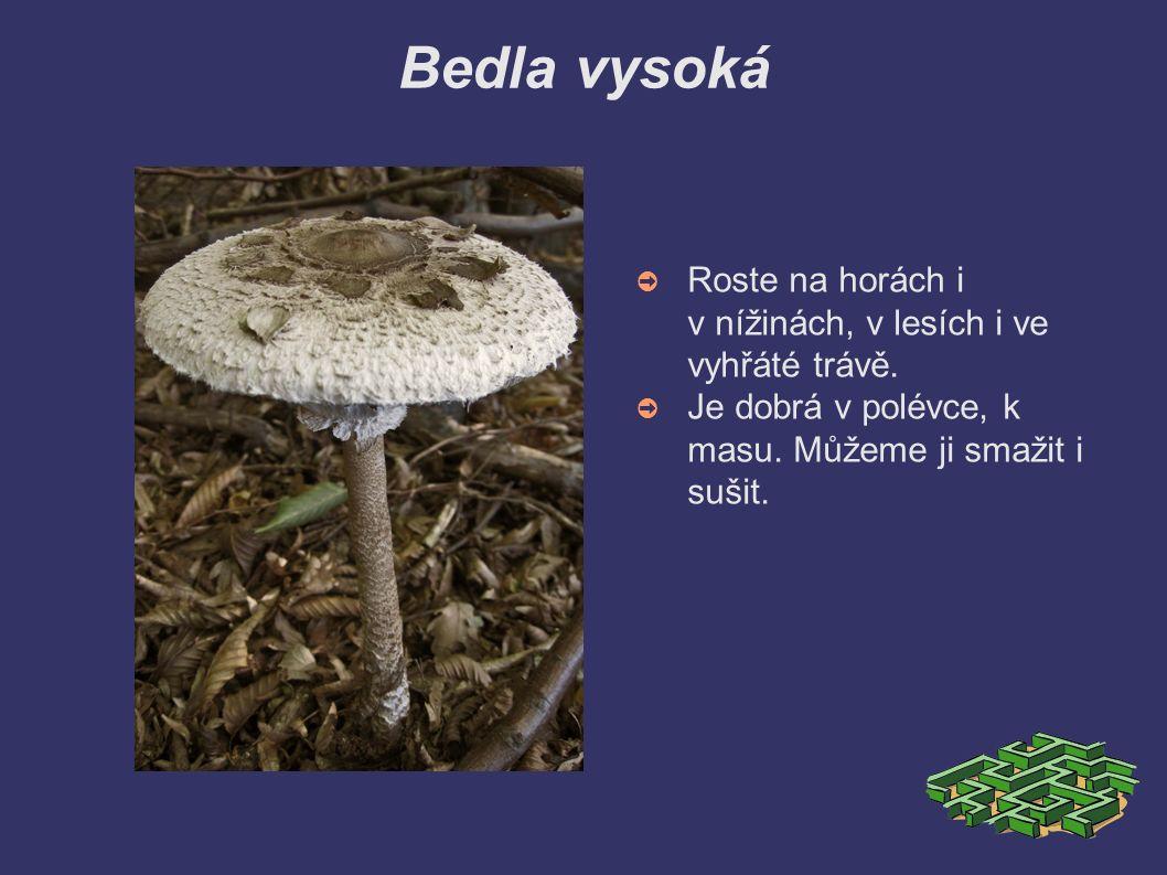 Bedla vysoká ➲ Roste na horách i v nížinách, v lesích i ve vyhřáté trávě.