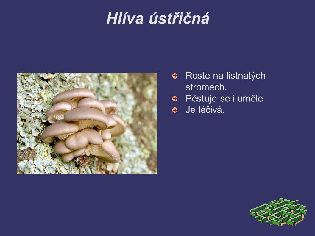 Jedovaté houby