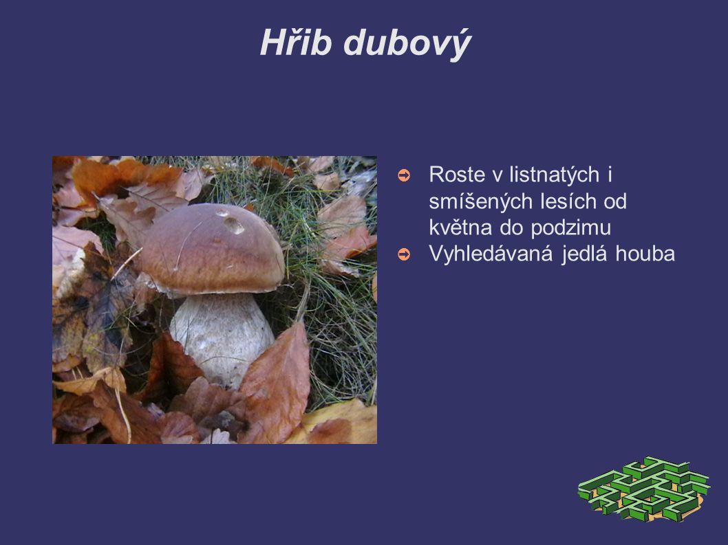 Hřib hnědý (suchohřib) ➲ Lidově se mu říká podborovák ➲ Roste v listnatých i jehličnatých lesích od září do listopadu ➲ Chutná houba, ale nedoporučuje se jíst příliš často, absorbuje mnoho škodlivých látek