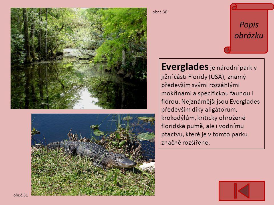 Popis obrázku obr.č.31 obr.č.30 Everglades je národní park v jižní části Floridy (USA), známý především svými rozsáhlými mokřinami a specifickou faunou i flórou.