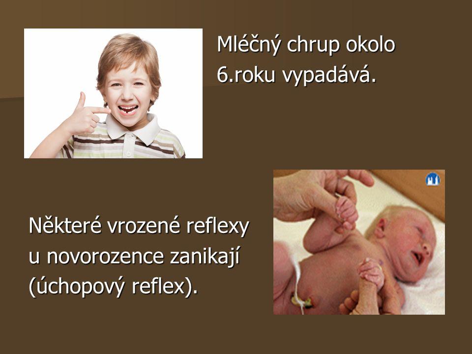Mléčný chrup okolo Mléčný chrup okolo 6.roku vypadává. 6.roku vypadává. Některé vrozené reflexy u novorozence zanikají (úchopový reflex).