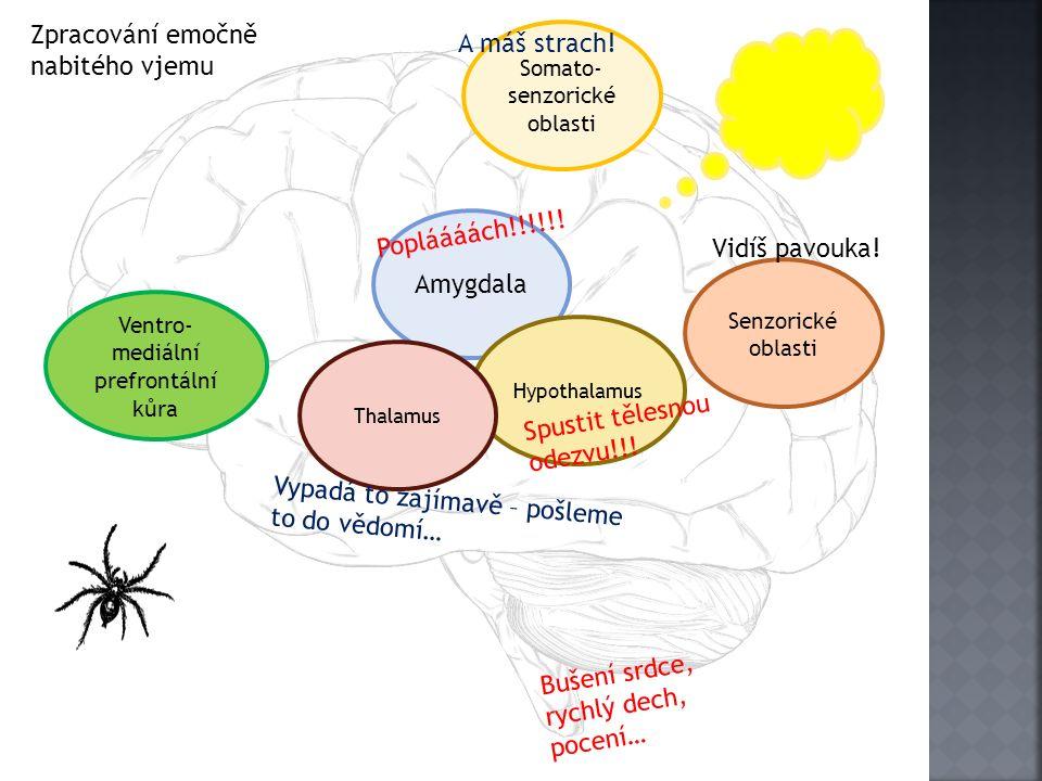 Senzorické oblasti Amygdala Hypothalamus Somato- senzorické oblasti Ventro- mediální prefrontální kůra Thalamus Popláááách!!!!!! Vypadá to zajímavě –
