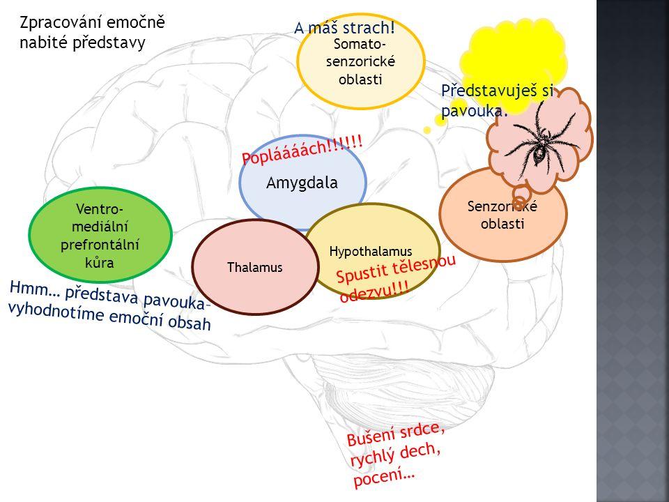Senzorické oblasti Amygdala Hypothalamus Somato- senzorické oblasti Ventro- mediální prefrontální kůra Thalamus Popláááách!!!!!! Spustit tělesnou odez
