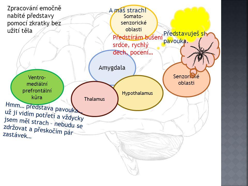 Senzorické oblasti Amygdala Hypothalamus Somato- senzorické oblasti Ventro- mediální prefrontální kůra Thalamus A máš strach! Zpracování emočně nabité