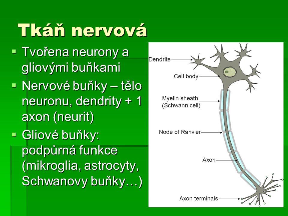 Tkáň nervová  Tvořena neurony a gliovými buňkami  Nervové buňky – tělo neuronu, dendrity + 1 axon (neurit)  Gliové buňky: podpůrná funkce (mikroglia, astrocyty, Schwanovy buňky…)