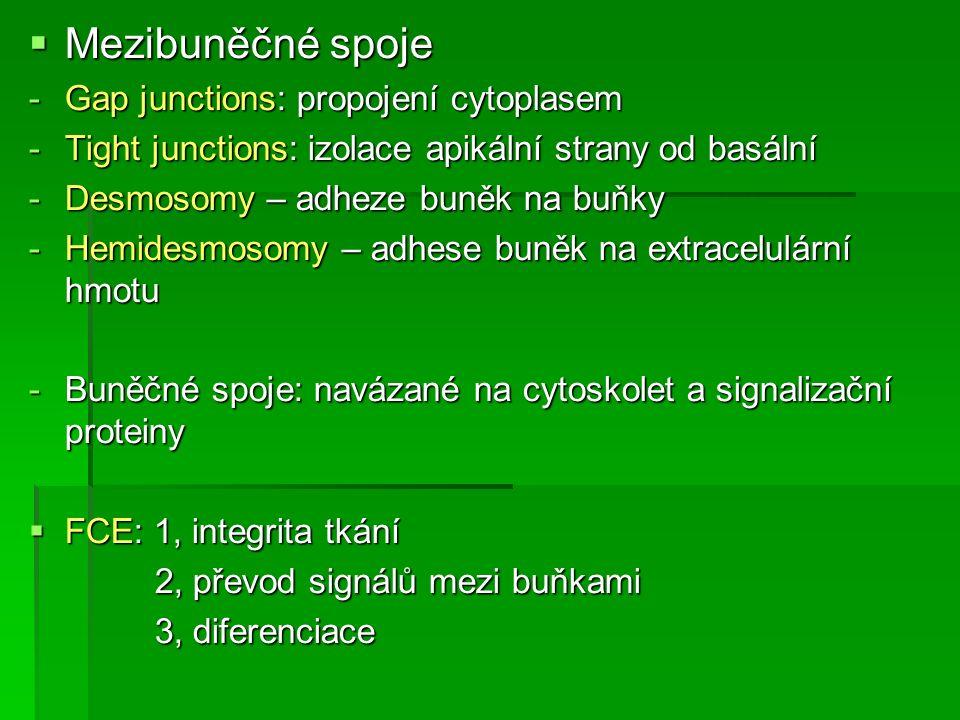 Tkáň svalová  Kosterní, příčně pruhovaná svalová tkáň.