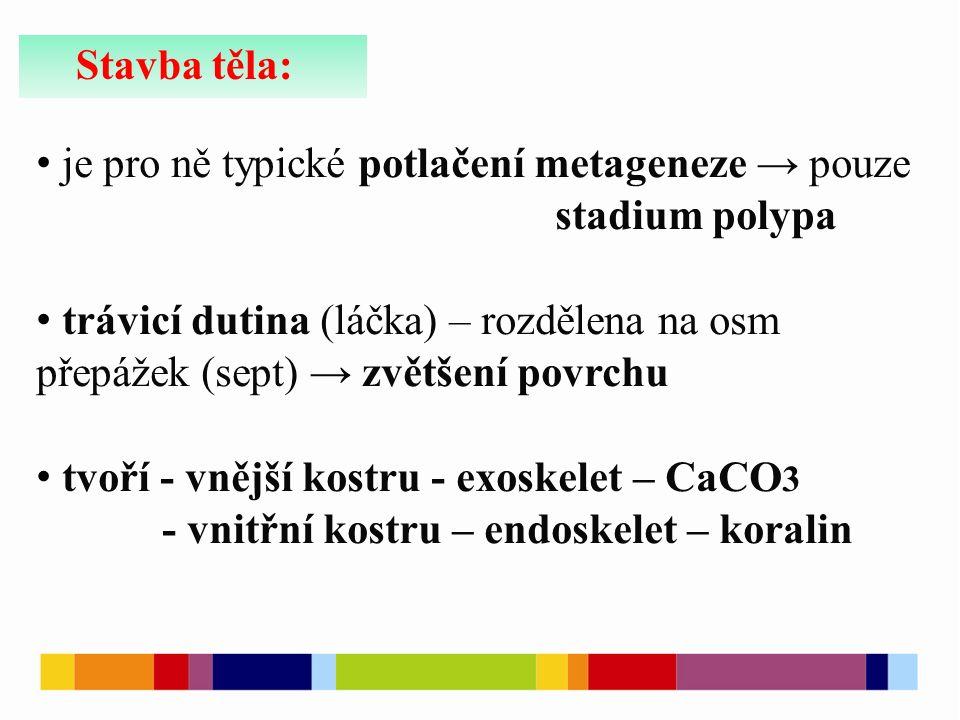 Stavba těla: je pro ně typické potlačení metageneze → pouze stadium polypa trávicí dutina (láčka) – rozdělena na osm přepážek (sept) → zvětšení povrchu tvoří - vnější kostru - exoskelet – CaCO 3 - vnitřní kostru – endoskelet – koralin