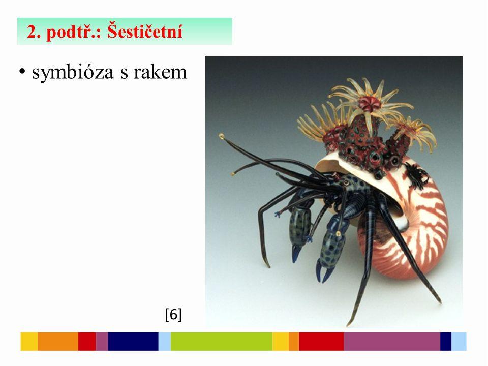 2. podtř.: Šestičetní symbióza s rakem [6]