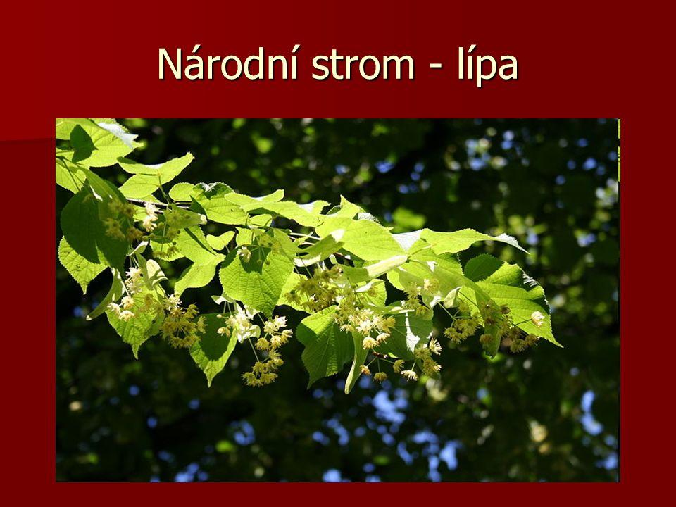 Národní strom - lípa
