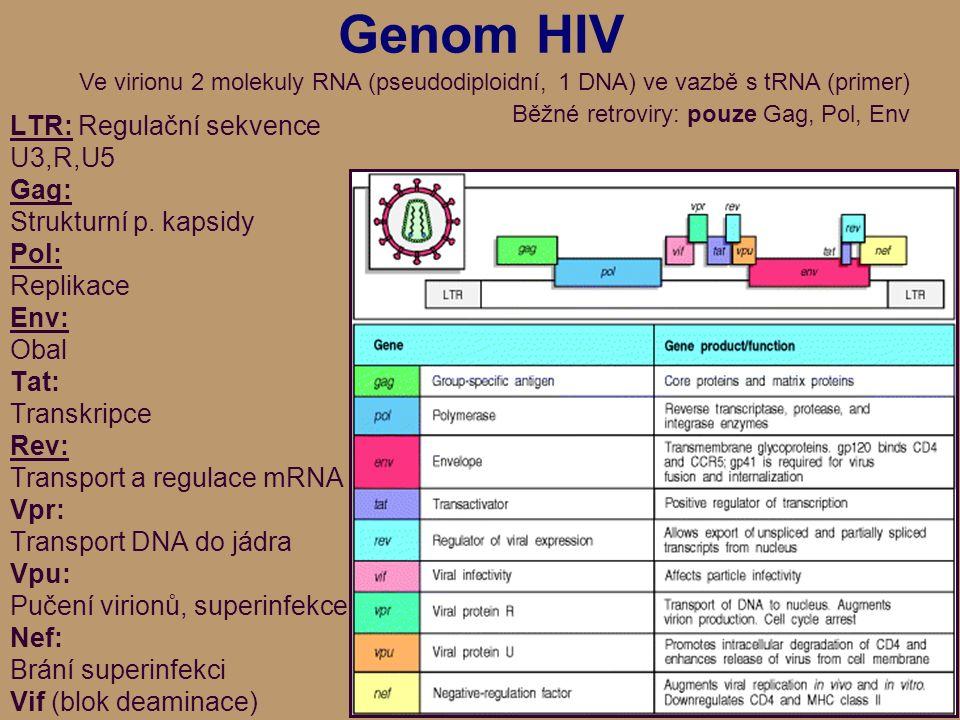 Genom HIV LTR: Regulační sekvence U3,R,U5 Gag: Strukturní p.
