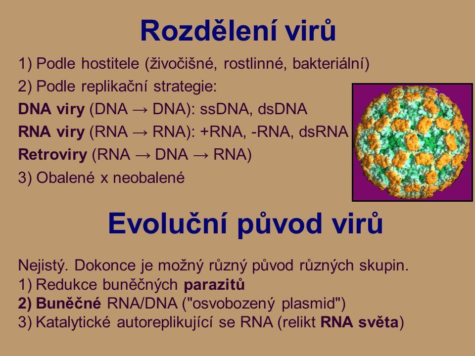 Rozdělení virů 1)Podle hostitele (živočišné, rostlinné, bakteriální) 2)Podle replikační strategie: DNA viry (DNA → DNA): ssDNA, dsDNA RNA viry (RNA → RNA): +RNA, -RNA, dsRNA Retroviry (RNA → DNA → RNA) 3) Obalené x neobalené Evoluční původ virů Nejistý.