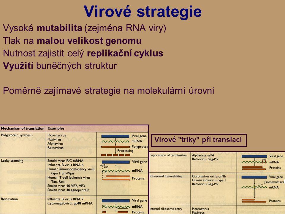 Virové strategie Vysoká mutabilita (zejména RNA viry) Tlak na malou velikost genomu Nutnost zajistit celý replikační cyklus Využití buněčných struktur Poměrně zajímavé strategie na molekulární úrovni Virové triky při translaci