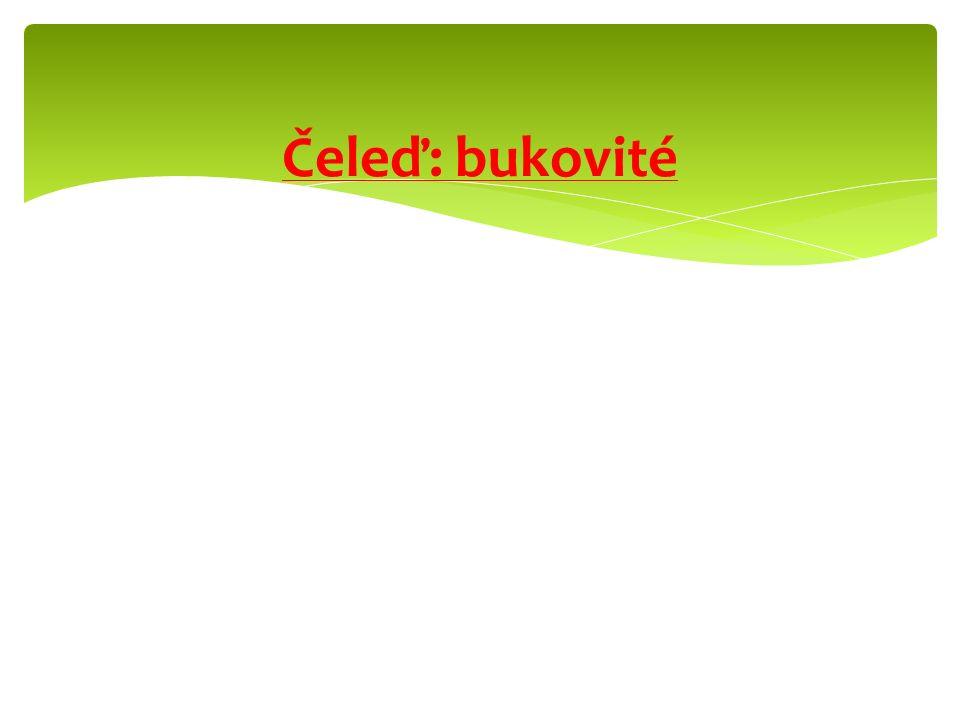 Líska obecnáLíska turecká
