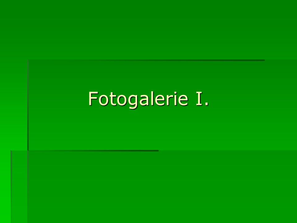 Fotogalerie I.