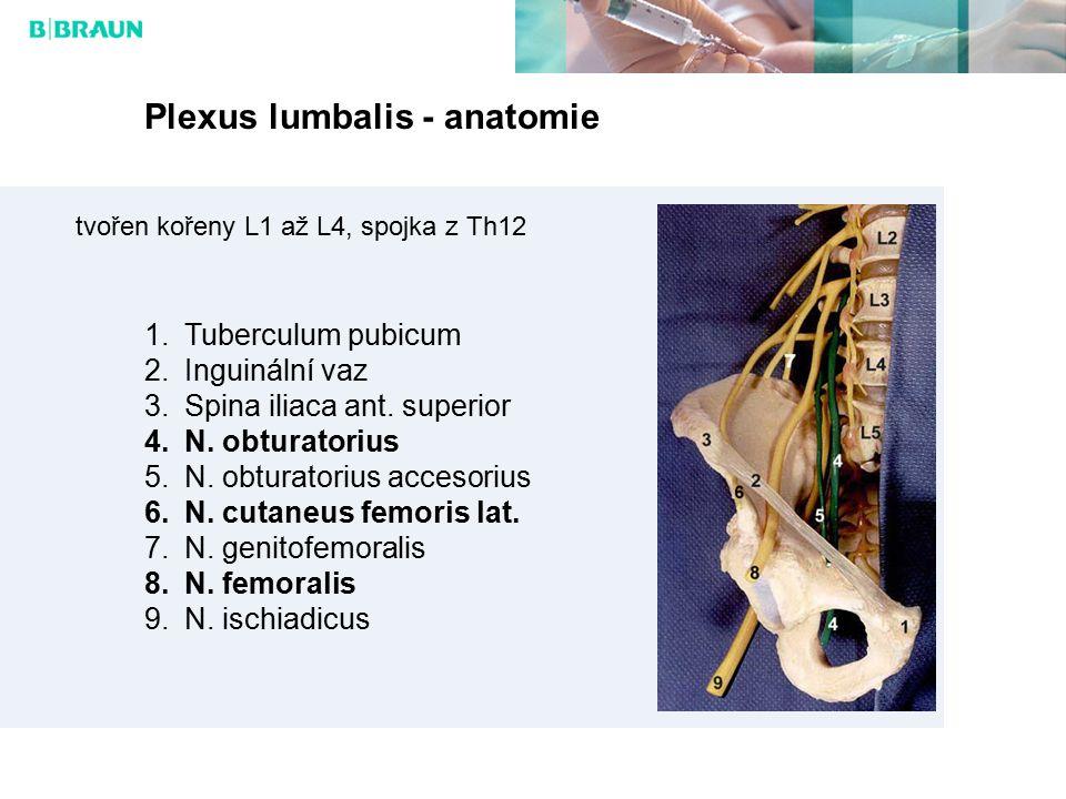 Plexus lumbalis - anatomie inervace:  ventrokaudální části břišní stěny (n.