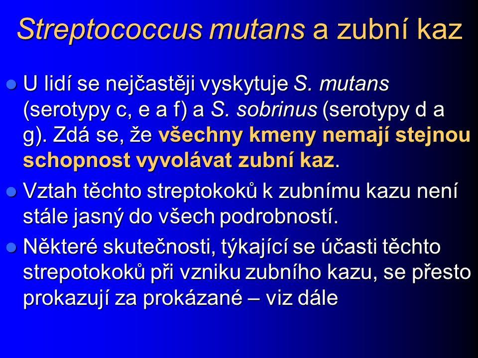 Streptococcus mutans a zubní kaz U lidí se nejčastěji vyskytuje S. mutans (serotypy c, e a f) a S. sobrinus (serotypy d a g). Zdá se, že všechny kmeny