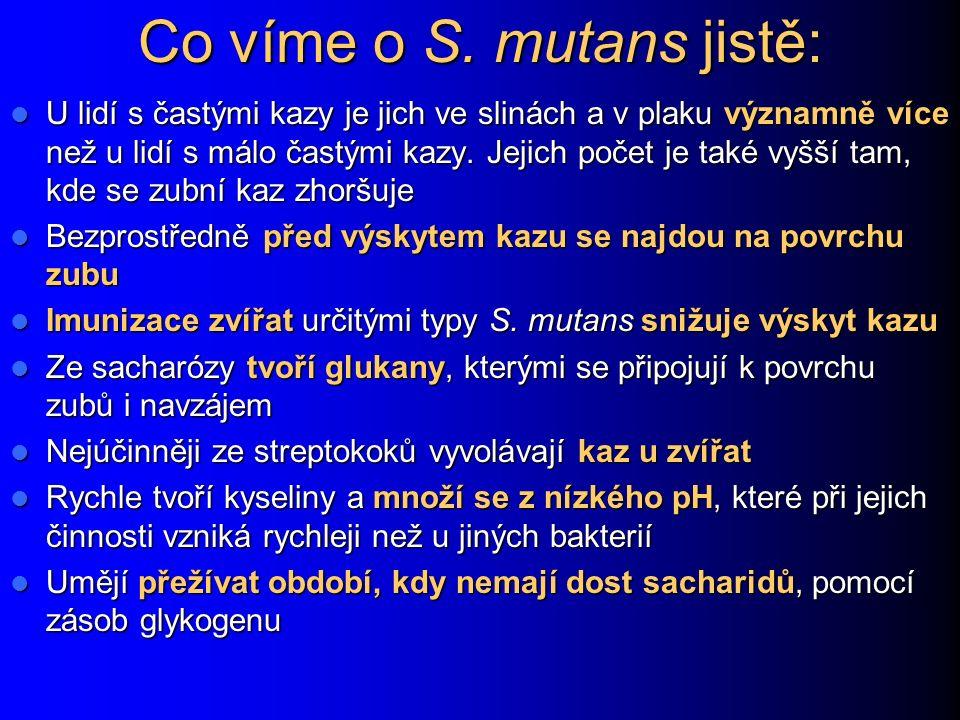 Co víme o S. mutans jistě: U lidí s častými kazy je jich ve slinách a v plaku významně více než u lidí s málo častými kazy. Jejich počet je také vyšší
