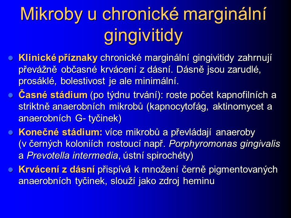 Mikroby u chronické marginální gingivitidy Klinické příznaky chronické marginální gingivitidy zahrnují převážně občasné krvácení z dásní. Dásně jsou z