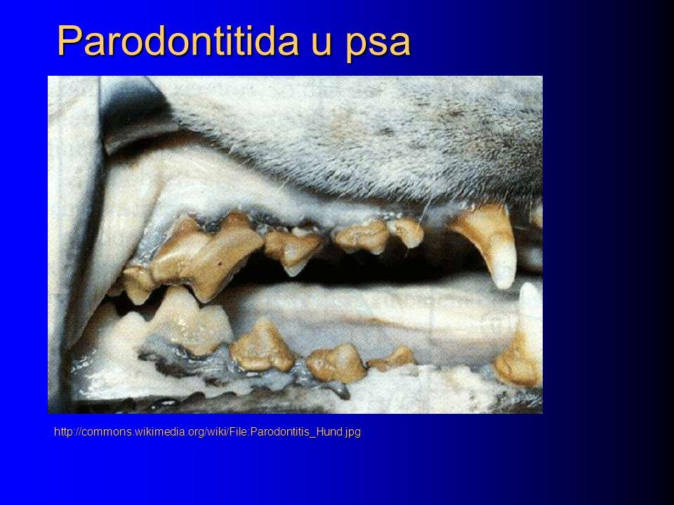 Parodontitida u psa http://commons.wikimedia.org/wiki/File:Parodontitis_Hund.jpg