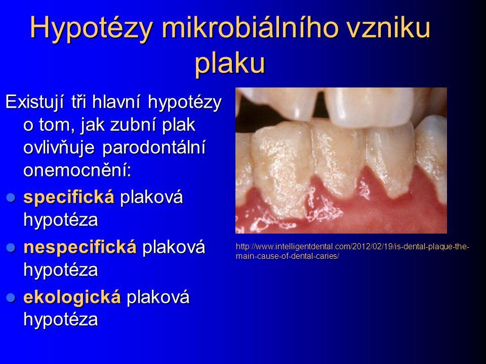 Hypotézy mikrobiálního vzniku plaku Existují tři hlavní hypotézy o tom, jak zubní plak ovlivňuje parodontální onemocnění: specifická plaková hypotéza