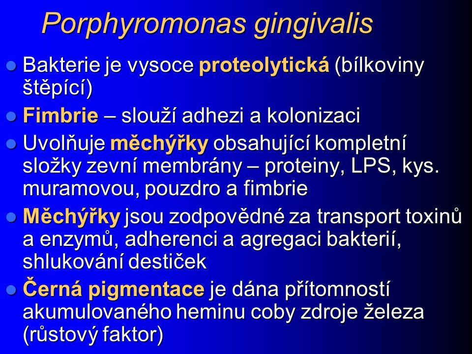 Porphyromonas gingivalis Bakterie je vysoce proteolytická (bílkoviny štěpící) Bakterie je vysoce proteolytická (bílkoviny štěpící) Fimbrie – slouží ad