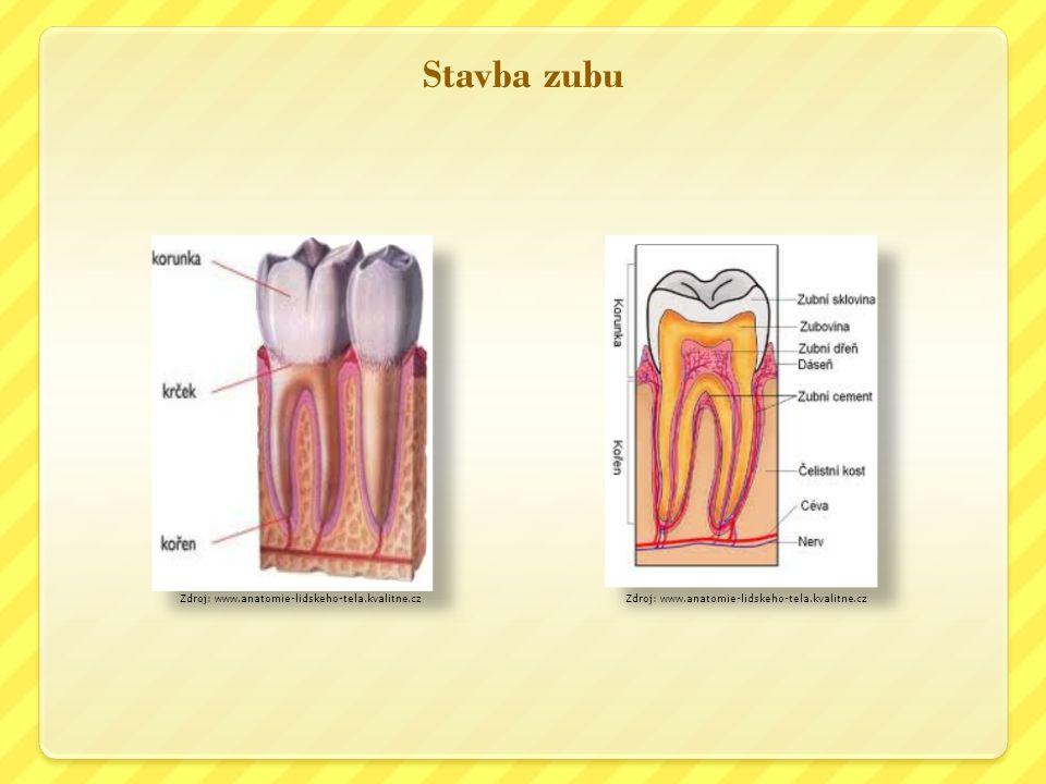 Stavba zubu Zdroj: www.anatomie-lidskeho-tela.kvalitne.cz