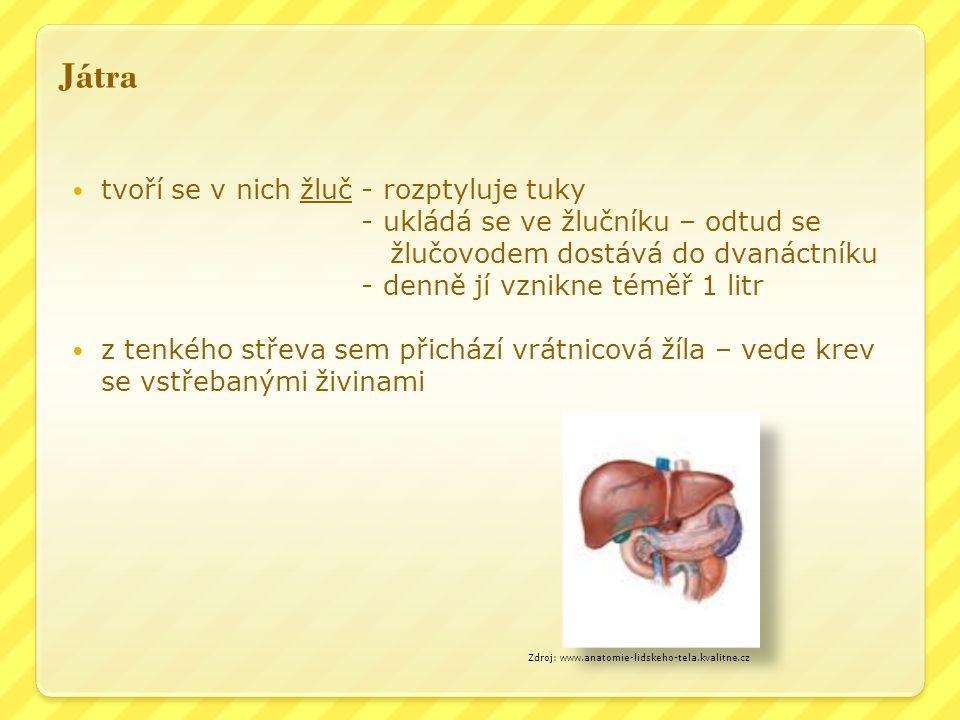 Játra tvoří se v nich žluč - rozptyluje tuky - ukládá se ve žlučníku – odtud se žlučovodem dostává do dvanáctníku - denně jí vznikne téměř 1 litr z tenkého střeva sem přichází vrátnicová žíla – vede krev se vstřebanými živinami Zdroj: www.anatomie-lidskeho-tela.kvalitne.cz
