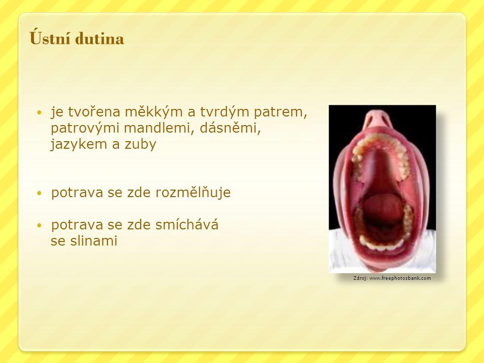 Ústní dutina je tvořena měkkým a tvrdým patrem, patrovými mandlemi, dásněmi, jazykem a zuby potrava se zde rozmělňuje potrava se zde smíchává se slinami Zdroj: www.freephotosbank.com