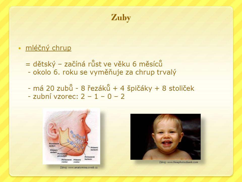 Zuby mléčný chrup = dětský – začíná růst ve věku 6 měsíců - okolo 6.