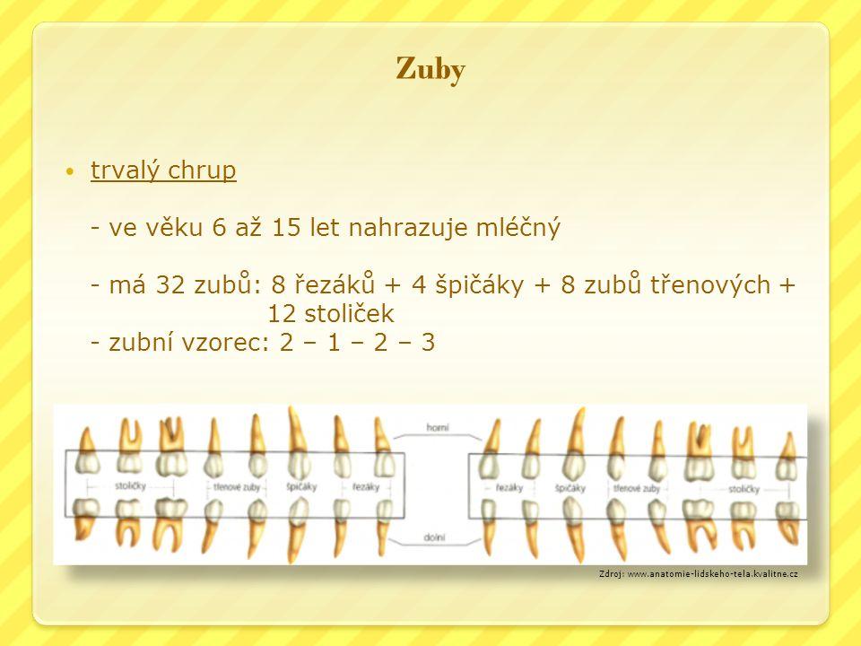 Zuby trvalý chrup - ve věku 6 až 15 let nahrazuje mléčný - má 32 zubů: 8 řezáků + 4 špičáky + 8 zubů třenových + 12 stoliček - zubní vzorec: 2 – 1 – 2 – 3 Zdroj: www.anatomie-lidskeho-tela.kvalitne.cz