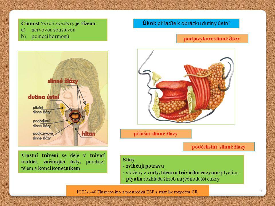 3 ICT2-1-40 Financováno z prostředků ESF a státního rozpočtu ČR Činnost trávicí soustavy je řízena: a)nervovou soustavou b)pomocí hormonů Vlastní trávení se děje v trávicí trubici, začínající ústy, prochází tělem a končí konečníkem podjazykové slinné žlázy podčelistní slinné žlázy příušní slinné žlázy Úkol: přiřaďte k obrázku dutiny ústní Sliny - zvlhčují potravu - složeny z vody, hlenu a trávicího enzymu-ptyalinu - ptyalin rozkládá škrob na jednodušší cukry