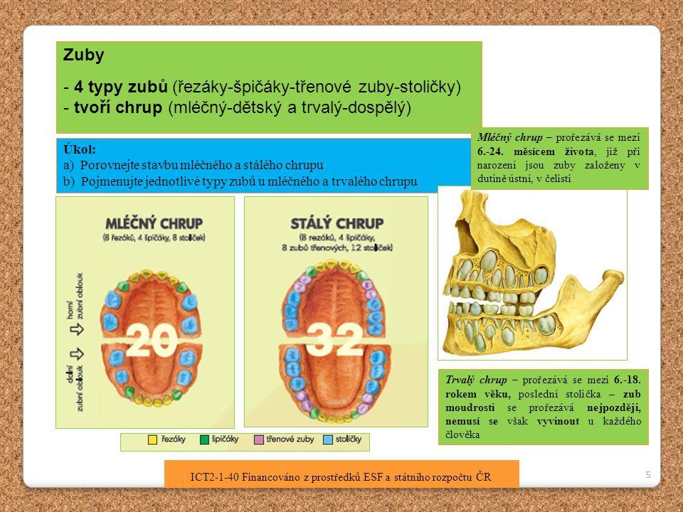 5 ICT2-1-40 Financováno z prostředků ESF a státního rozpočtu ČR Zuby - 4 typy zubů (řezáky-špičáky-třenové zuby-stoličky) - tvoří chrup (mléčný-dětský a trvalý-dospělý) Úkol: a) Porovnejte stavbu mléčného a stálého chrupu b) Pojmenujte jednotlivé typy zubů u mléčného a trvalého chrupu Mléčný chrup – prořezává se mezi 6.-24.