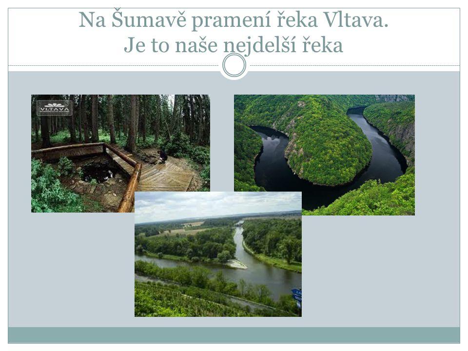 V Krkonoších pramení řeka Labe