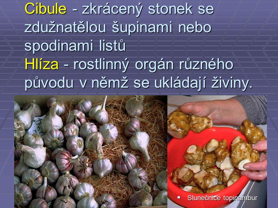 Cibule - zkrácený stonek se zdužnatělou šupinami nebo spodinami listů Hlíza - rostlinný orgán různého původu v němž se ukládají živiny.