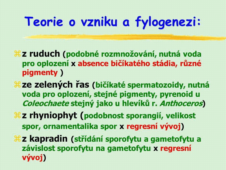 Teorie o vzniku a fylogenezi: zz ruduch (podobné rozmnožování, nutná voda pro oplození x absence bičíkatého stádia, různé pigmenty ) zze zelených řas
