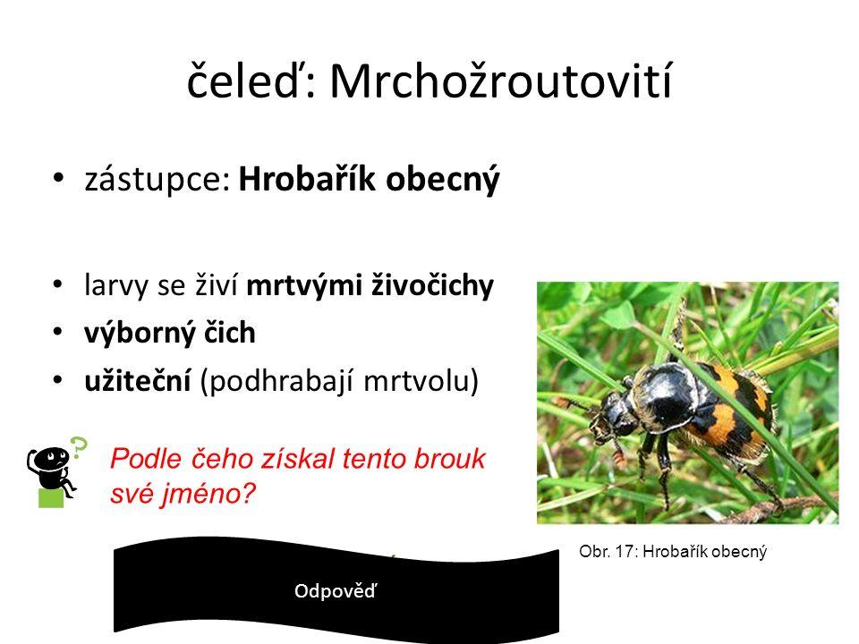 čeleď: Mrchožroutovití zástupce: Hrobařík obecný larvy se živí mrtvými živočichy výborný čich užiteční (podhrabají mrtvolu) Obr. 17: Hrobařík obecný P