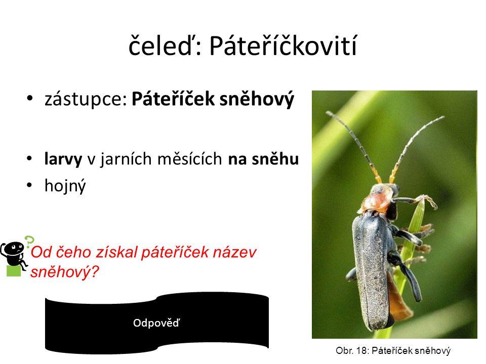 čeleď: Páteříčkovití zástupce: Páteříček sněhový larvy v jarních měsících na sněhu hojný Obr. 18: Páteříček sněhový Od čeho získal páteříček název sně