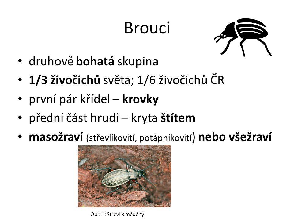 čeleď: Slunéčkovití zástupce: Slunéčko sedmitečné larvy i dospělci draví potrava - mšice Obr.