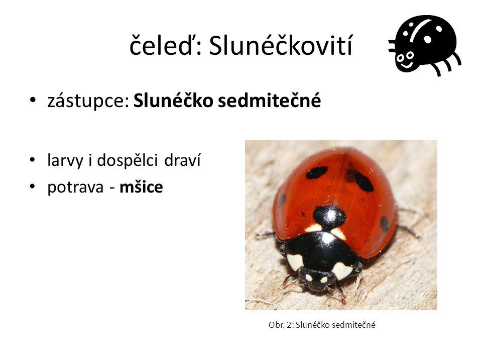čeleď: Slunéčkovití zástupce: Slunéčko sedmitečné larvy i dospělci draví potrava - mšice Obr. 2: Slunéčko sedmitečné