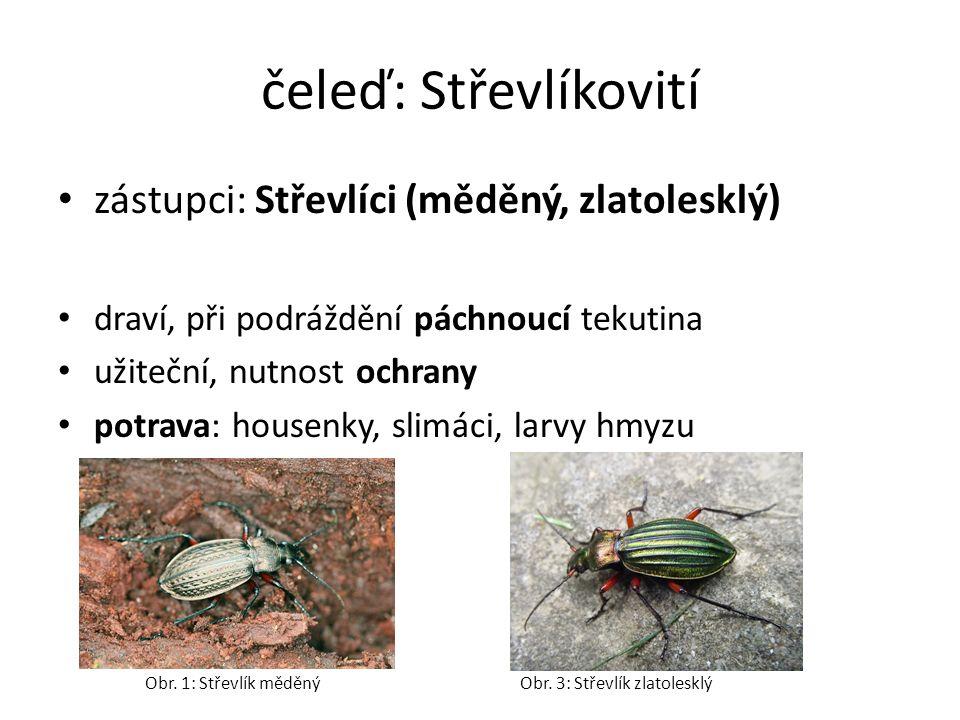 čeleď: Střevlíkovití zástupci: Střevlíci (měděný, zlatolesklý) draví, při podráždění páchnoucí tekutina užiteční, nutnost ochrany potrava: housenky, slimáci, larvy hmyzu Obr.