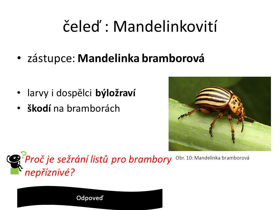 čeleď : Mandelinkovití zástupce: Mandelinka bramborová larvy i dospělci býložraví škodí na bramborách Proč je sežrání listů pro brambory nepříznivé? N