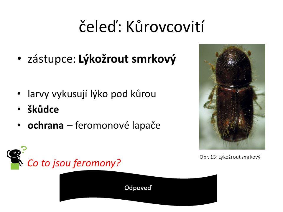 čeleď: Kůrovcovití zástupce: Lýkožrout smrkový larvy vykusují lýko pod kůrou škůdce ochrana – feromonové lapače Co to jsou feromony? Chem. látky vyluč