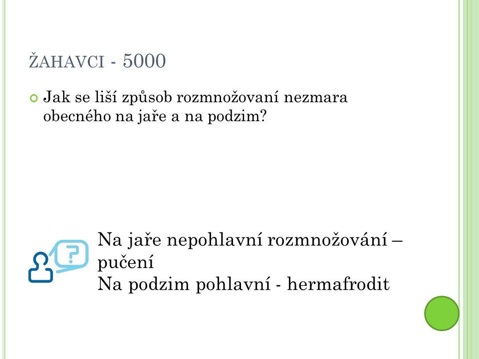 ŽAHAVCI - 5000 Jak se liší způsob rozmnožovaní nezmara obecného na jaře a na podzim.