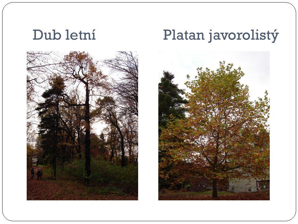 Ze strom ů opadalo veškeré listí a plody.Stromy se p ř ipravuji na zimní období.