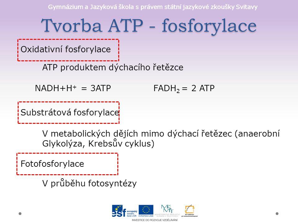Gymnázium a Jazyková škola s právem státní jazykové zkoušky Svitavy Tvorba ATP - fosforylace Oxidativní fosforylace ATP produktem dýchacího řetězce NADH+H + = 3ATPFADH 2 = 2 ATP Substrátová fosforylace V metabolických dějích mimo dýchací řetězec (anaerobní Glykolýza, Krebsův cyklus) Fotofosforylace V průběhu fotosyntézy