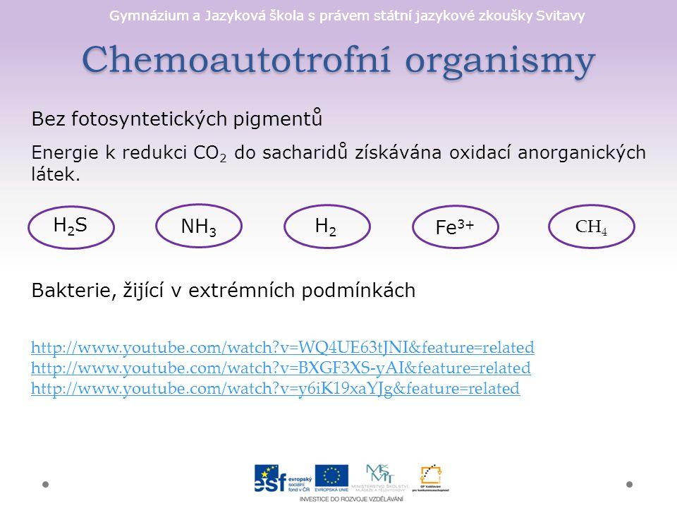 Gymnázium a Jazyková škola s právem státní jazykové zkoušky Svitavy Chemoautotrofní organismy Bez fotosyntetických pigmentů Energie k redukci CO 2 do sacharidů získávána oxidací anorganických látek.