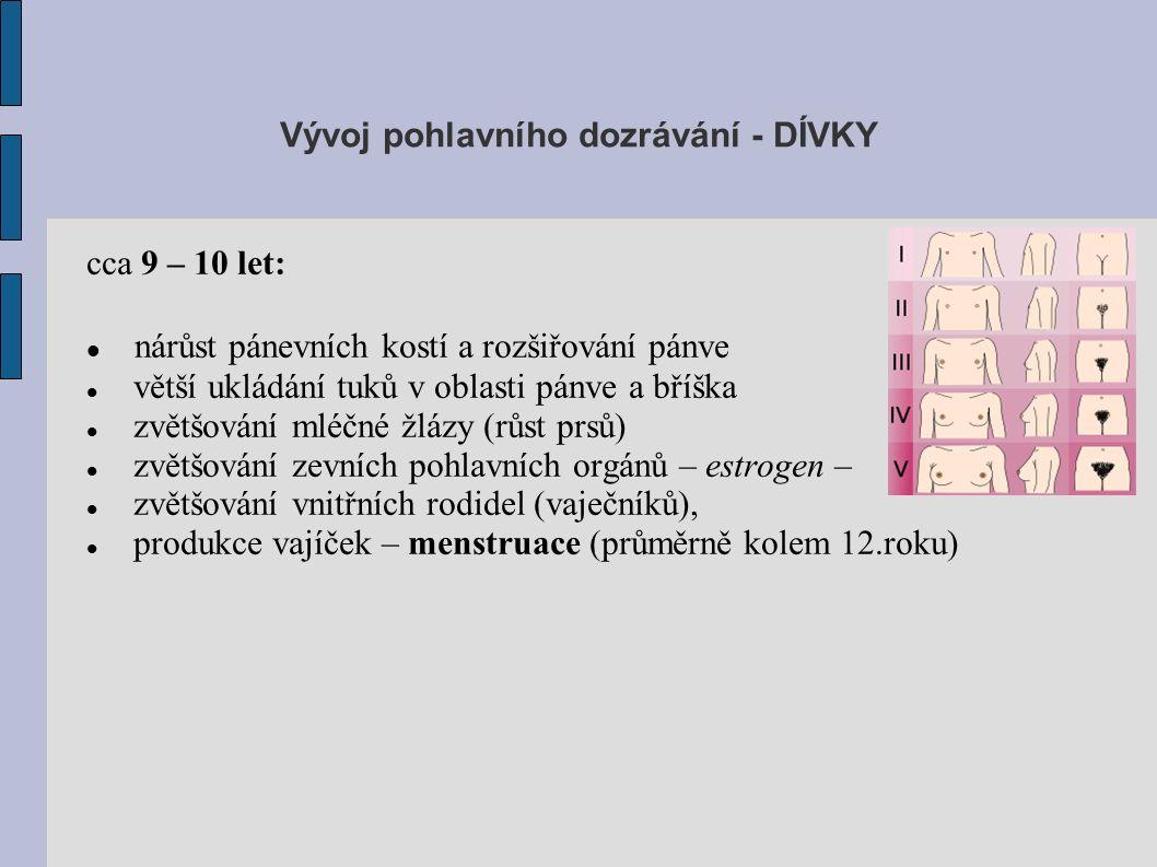cca 9 – 10 let: nárůst pánevních kostí a rozšiřování pánve větší ukládání tuků v oblasti pánve a bříška zvětšování mléčné žlázy (růst prsů) zvětšování zevních pohlavních orgánů – estrogen – zvětšování vnitřních rodidel (vaječníků), produkce vajíček – menstruace (průměrně kolem 12.roku) Vývoj pohlavního dozrávání - DÍVKY